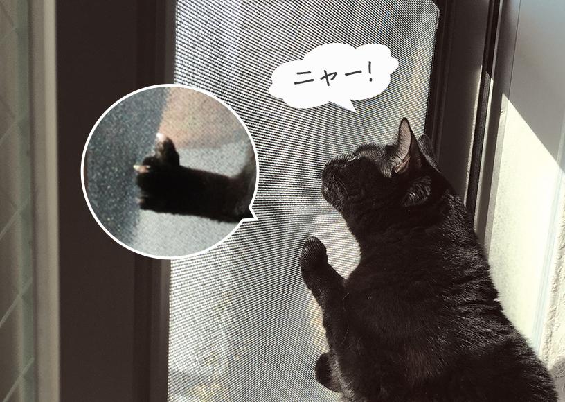 猫の引っ搔きに強い網戸